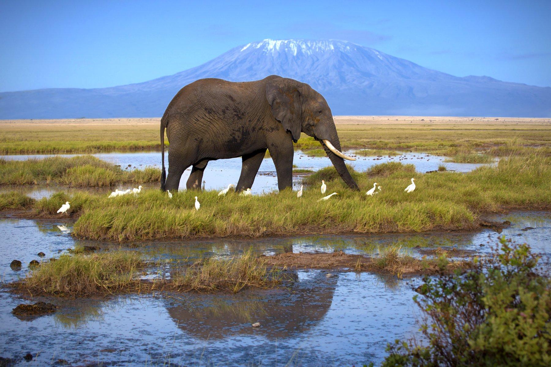 Safari a relax na pláži v Keni